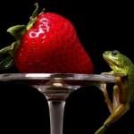 Проективный тест Ворованные ягоды.